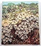 Connecticut and American Impressionism, Rovetti, Paul F., 0918386322