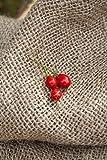 Wiri Wiri Heirloom Pepper Premium Seed Packet + More