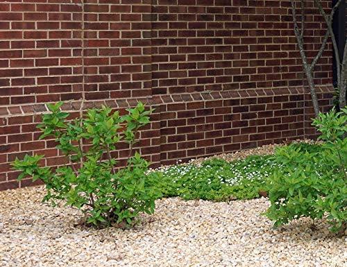 砂利 砕石 天然石 石 洋風 庭石 小石 黄色系 クラッシュ イエロー ミックス 約2cm 20mm内外 約15-30mm 20kg入
