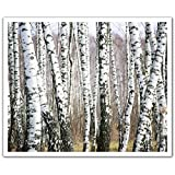 J.P. London Peel and Stick Removable Wall Decal Sticker Mural, Birch Forest Trees Black and White, 24 by 19.75-Inch