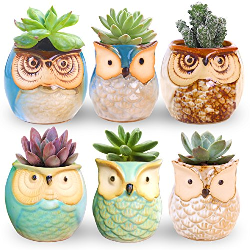 6 Beautiful Ceramic - ROSE CREATE 6 Pcs 2.5 Inches Owl Pots, Little Ceramic Succulent Bonsai Pots with a Hole - Pack of 6