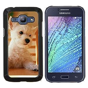 Terrier de mojón de Australia Norfolk perro del oeste- Metal de aluminio y de plástico duro Caja del teléfono - Negro - Samsung Galaxy J1 / J100