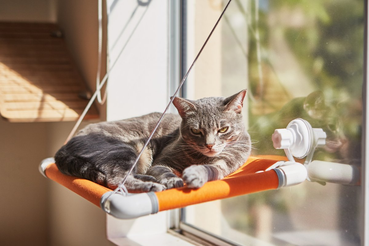 Cat Bed Sunny Window Perch - Assembled With FREE Adjustable Cat Collar 2 EXTRA Strong Suction Cups Thick Stainless Steel With Soft Rubber Protection