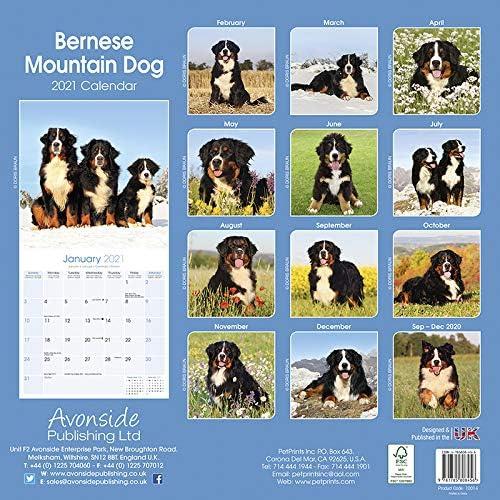 CALENDRIER 2021 BOUVIER BERNOIS (av) chien de race bouvier bernois