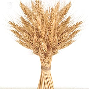 Golden Dried Wheat Sheaves 100 Stems Bundle Premium Autumn Arrangements Full Wholesale DIY Home Table Wedding Xmas New Year Decoration