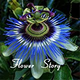 40 Seeds Passion Fruit (Passiflora Caerulea) fresh fragrant bloom huge flower, robust climber Original Package Free shipping