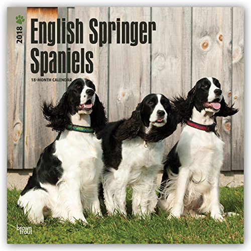 English Springer Spaniels 2018 Monthly Square Wall Calendar