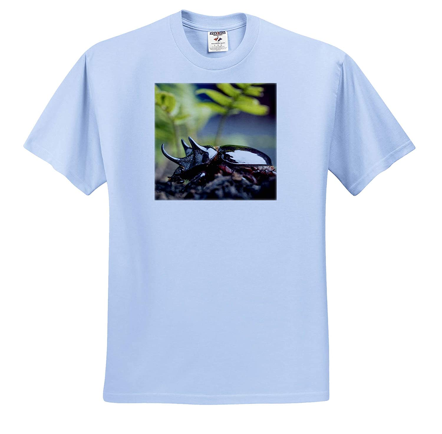 Insects Major Ox or Hercules Beetle Showing Horns Elephant - Adult T-Shirt XL ts/_314774 3dRose Danita Delimont