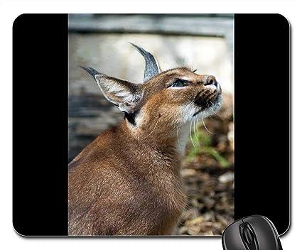 Amazon Com Mouse Pads Desert Lynx Karakal Caracal Caracal