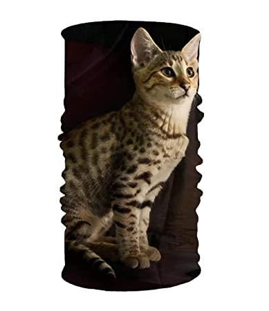 Amazon.com   Animal Cats Face Bandana Mask f5cfd4da8f71c