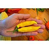 10 Seeds Aji Lemon Drop Peppers Seeds, Distinctive Citrus Flavor, Bright Yellow Color.
