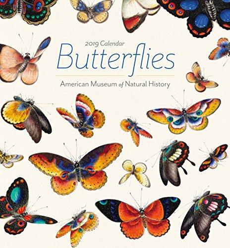 Butterfly Calendar - Butterflies 2019 Mini Wall Calendar