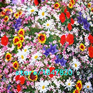 Hot Selling 100 Pieces Wildflowers Combination Seeds Perennial Flower Planting Mixed Wildflower Seeds Aromatic Pleasant