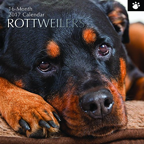 "Dog Breeds - Rottweilers 2017 Monthly Wall Calendar, 12"" x 12"""