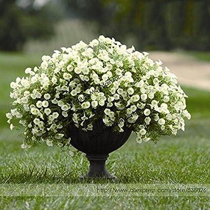 Amazon 2018 Hot Sale Heirloom Bonsai White Petunia Flower
