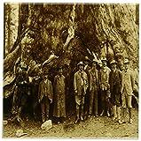 3dRose cst_16240_3 Teddy Roosevelt and John Muir