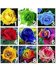 9 colori 450 semi di rosa (50 semi di ogni colore), semi di fiori rosa, Rosa dell'arcobaleno, fai da te Bonsai