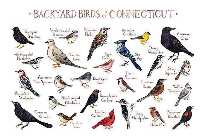 Backyard Birds Of Connecticut Field Guide Art Print
