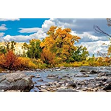 Fall Colors Photography Art Print - Picture of Autumn Leaves on Trees Along Wind River in Wyoming Western Decor Artwork for Home Decoration 5x7 to 30x45