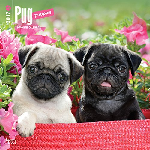 Pug-Puppies-2017-Calendar-12-x-12in