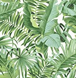 A-Street Prints 2744-24136 Alfresco green Palm Leaf Wallpaper Alfresco Palm Leaf Wallpaper