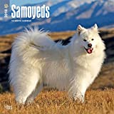 Samoyeds 2018 12 x 12 Inch Monthly Square Wall Calendar, Animals Dog Breeds