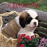 Saint Bernard Puppies 2001 Calendar