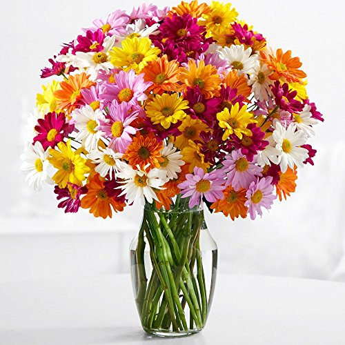Proflowers   20 Count Multi Colored 100 Blooms Of Poms With Glass Vase W Free Vase   Flowers