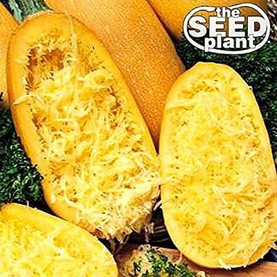 Spaghetti Squash Seeds 20 SEEDS NON-GMO
