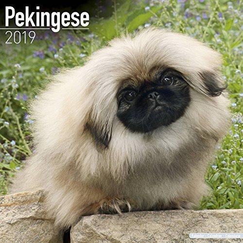 Pekingese Calendar 2019 - Dog Breed Calendar - Wall Calendar 2018-2019
