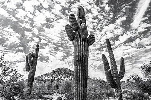 Photography, Desert Scene, Arizona, Cactus, Art, Photograph, Print, Home Decor, Wall Art, Travel Photography Rustic, Sizes Available from 5x7 to 20x30. Cactus Scene Wall Art