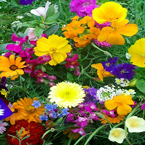 Outsidepride Rock Garden Annual Wild Flowers - 10000 Seeds