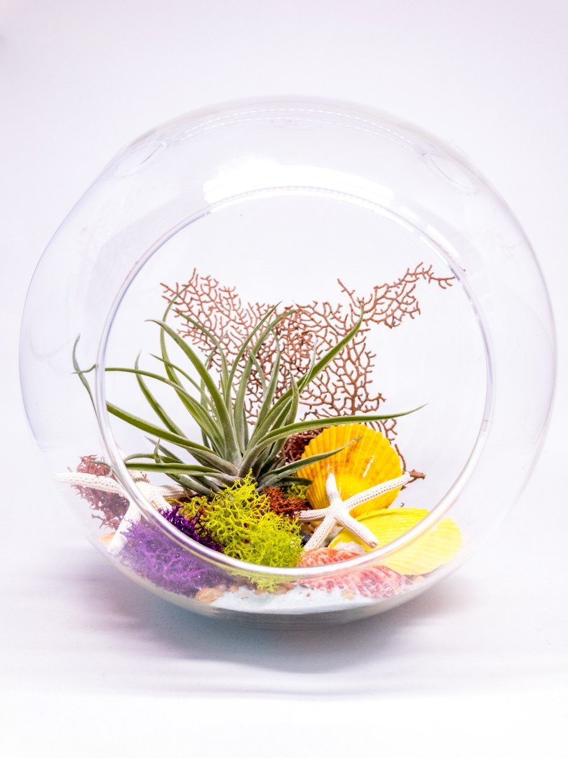 "Air Plant Terrarium Kit | Ocean Series Under The Sea | Complete Tillandsia Gift Set | 6 1/2"" Glass Globe 