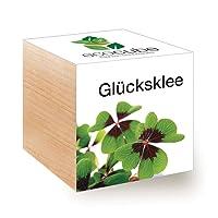 ecocube Holzwürfel - Glücksklee