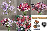 David's Garden Seeds Collection Set Flower Sweet Pea Seed NEP8463 (Multi) 5 Varieties 200 Plus Open Pollinated and Heirloom Seeds