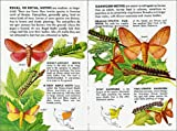 Golden Guide 160 Pages Paperback Field Guide to