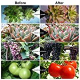 Grow Light, Ankace 5 Dimmable Levels Plant Grow