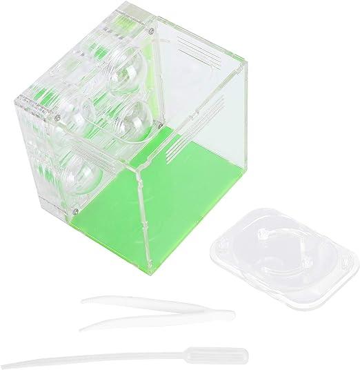 Caja de cría de Hormigas, Nido de Hormigas de acrílico poroso, Caja de Hormigas hidratante Transparente, Caja de cría de nidos de Insectos, Castillo de Hormigas: Amazon.es: Productos para mascotas
