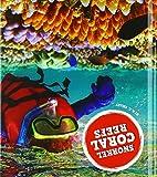 Snorkel Coral Reefs (Amazing Adventures)