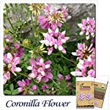 Mayan Seeds LLC Coronilla color seed packet of flower seeds easily cultivated flower ground cover plants