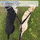 tobeDRI Double Dog Leash Coupler - 2 Padded