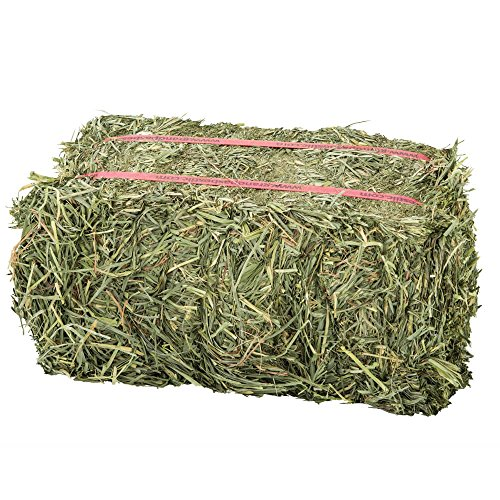- Grandpa'S Best Orchard Grass Bale, 10 Lbs