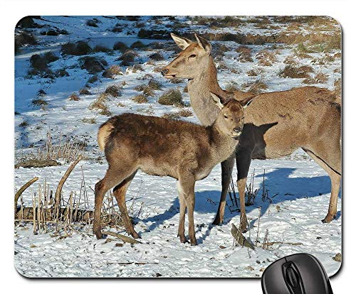 (Mouse Pad - Deer Forest Fallow Deer Nature Wild Animals 2)
