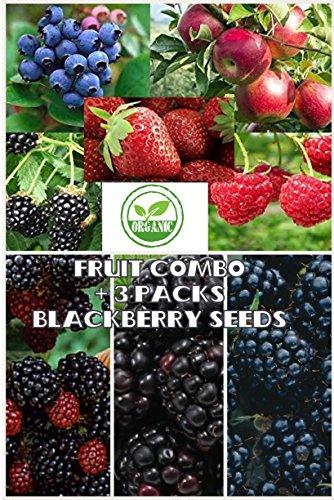 Fruit Combo Pack Raspberry, Blackberry, Blueberry, Strawberry, Apple (Organic) 975+ Seeds UPC 600188190564 & 3 Free Packs of Blackberry Seeds (Blackberry Combo)