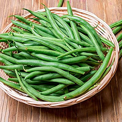 Harvester Bush Bean Seeds (Treated) - Non-GMO, Heirloom Green Bean Seeds - Vegetable Garden Seeds