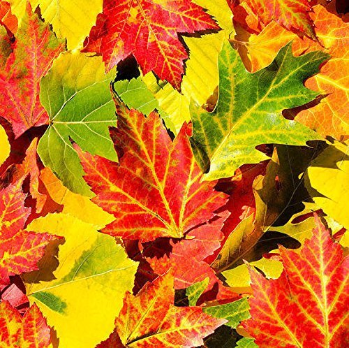 Autumn Leaves Abstract Print, Fall Foliage Nature Decor, Colorful Wall Art, Fine Art Photography