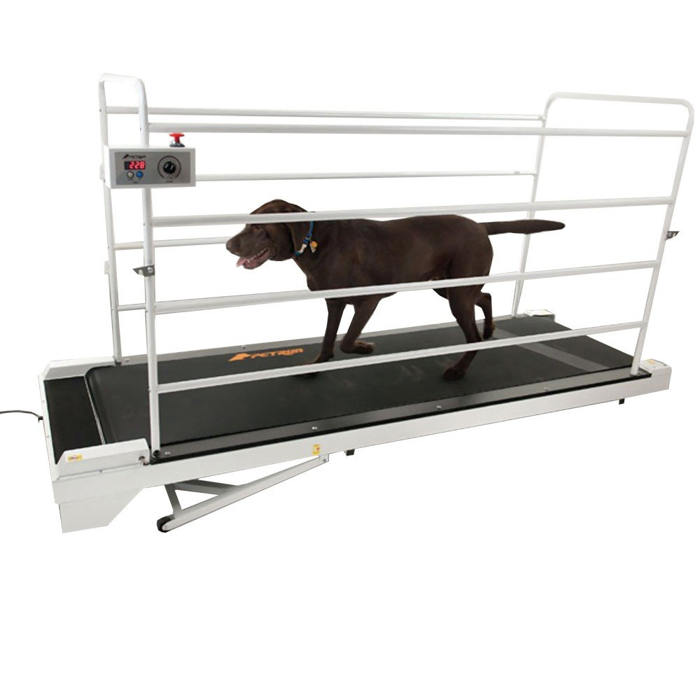 Can A Dog Run On A Human Treadmill
