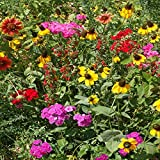 Outsidepride Southeast Wildflower Seed Mix - 1 LB