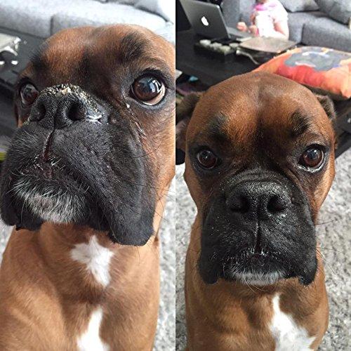Dry Dog Nose Home Remedy