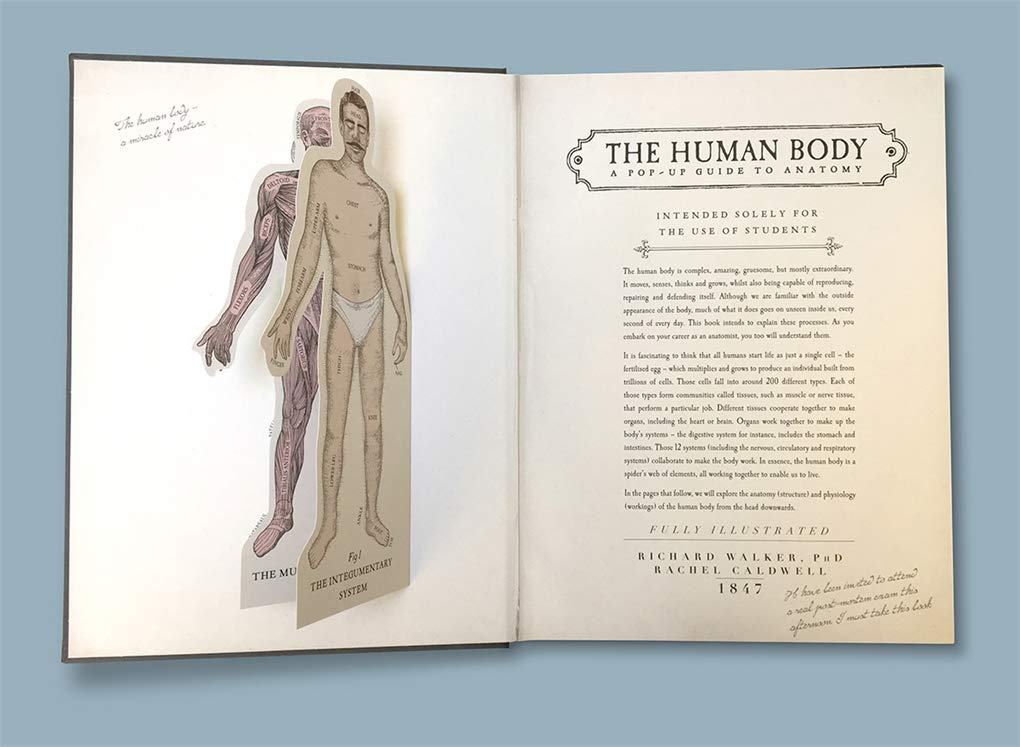 The Human Body A Pop Up Guide To Anatomy Amazon Richard Walker